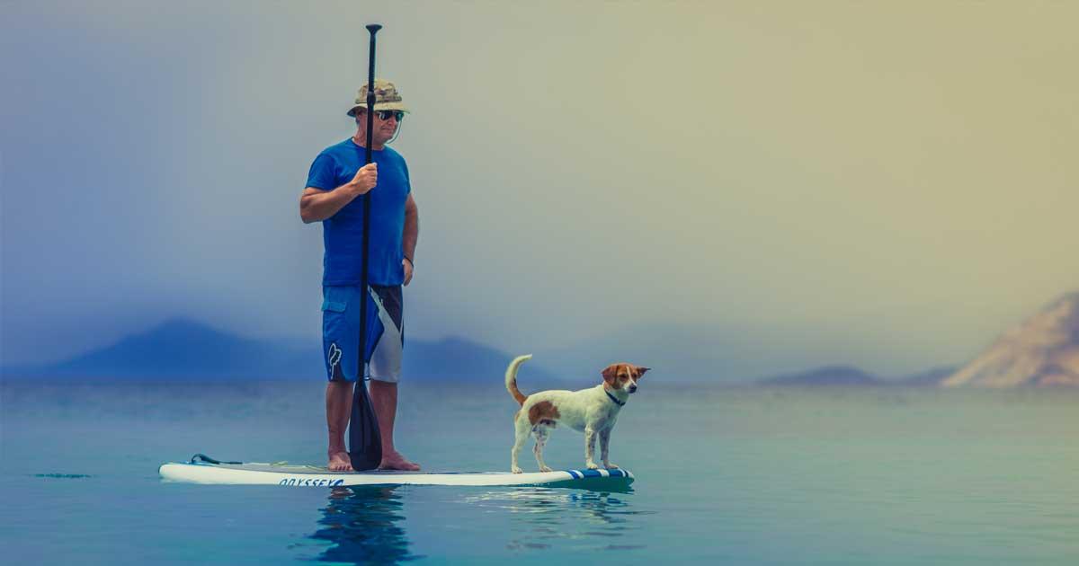 Man paddlar på SUP-bräda med sin hund.